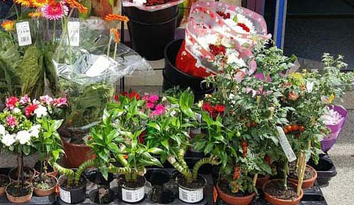 Find the Best Potted Plant Shop in London